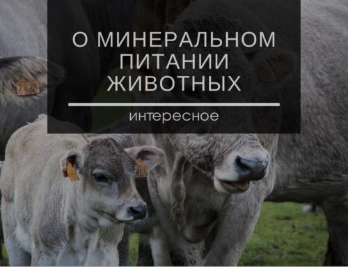 О минеральном питании животных