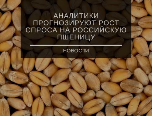Аналитики прогнозируют рост спроса на российскую пшеницу