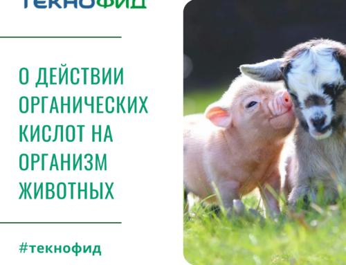 О действии органических кислот на организм животных